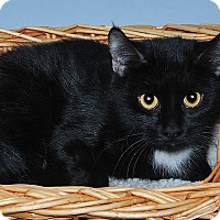 Adopt A Pet :: Mona - Gatineau, QC