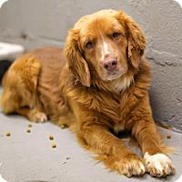 Adopt A Pet :: Theon - Roanoke, VA