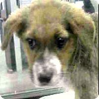 Adopt A Pet :: Cooper - Boulder, CO