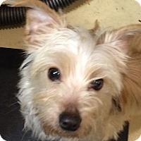 Adopt A Pet :: DUSTY - Oakland, CA
