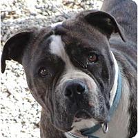 Adopt A Pet :: Vivi - Easy going girl! - Sacramento, CA