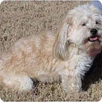 Adopt A Pet :: Spike - Windham, NH