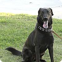 Adopt A Pet :: Izzy - Costa Mesa, CA