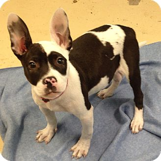 Memphis Adopt Dog