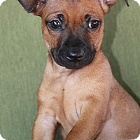 Adopt A Pet :: Isaac - Yuba City, CA