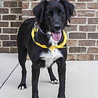 Adopt A Pet :: Georgia - Charlotte, NC