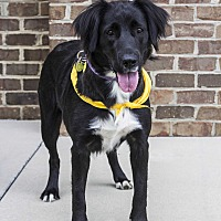 Adopt A Pet :: Georgia - Mooresville, NC