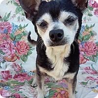 Adopt A Pet :: Bobby - Creston, CA