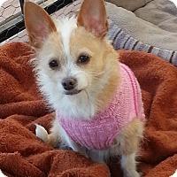 Adopt A Pet :: Reggie - Marietta, GA
