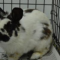 Adopt A Pet :: Hickory - Erie, PA