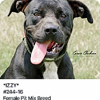 Adopt A Pet :: Izzy - RESCUED! - Zanesville, OH