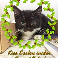 Adopt A Pet :: Easton - East Brunswick, NJ