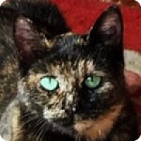 Adopt A Pet :: Trixie - Medford, MA