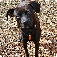 Adopt A Pet :: Vinny - Staunton, VA