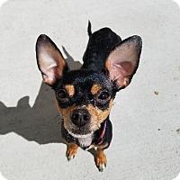 Adopt A Pet :: Diego - Gloversville, NY