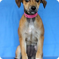Adopt A Pet :: Texas - Waldorf, MD