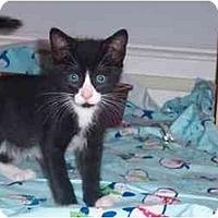 Adopt A Pet :: Pitch - Jenkintown, PA