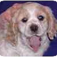 Adopt A Pet :: Rosy- in Flagstaff - Scottsdale, AZ