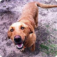 Adopt A Pet :: Conner - Franklin, TN