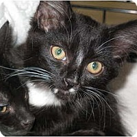 Adopt A Pet :: Selena - Port Republic, MD