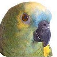 Adopt A Pet :: BORRIS - Mantua, OH