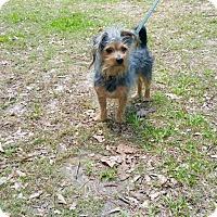 Adopt A Pet :: PJ - Fort Valley, GA
