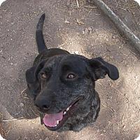 Adopt A Pet :: Belle - Buchanan Dam, TX