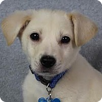 Adopt A Pet :: Sebastian - Minneapolis, MN