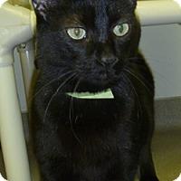 Adopt A Pet :: Francisco - Hamburg, NY