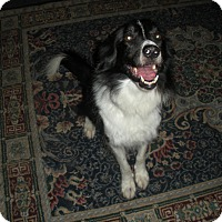 Adopt A Pet :: Norman - Midwest (WI, IL, MN), WI