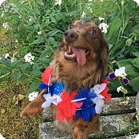 Adopt A Pet :: Oliver - Marcellus, MI