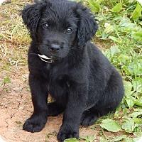 Adopt A Pet :: Charlie(7 lb) Fluffy Boy! - SUSSEX, NJ