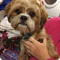 Adopt A Pet :: Tyson - Kansas city, MO