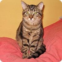 Adopt A Pet :: Jenny - Colmar, PA