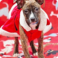 Adopt A Pet :: Lizzy adoption pending - Manchester, CT