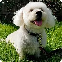 Adopt A Pet :: Cali - Los Angeles, CA