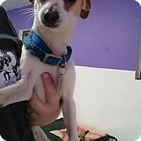 Adopt A Pet :: Dagger - Phoenix, AZ