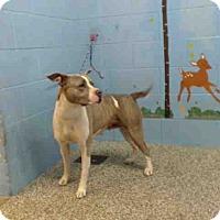 Adopt A Pet :: URGENT on 5/9 SAN BERNARDINO - San Bernardino, CA