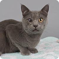 Adopt A Pet :: Pony Boy - Wilmington, DE