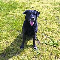 Adopt A Pet :: Bobo - Vineland, NJ