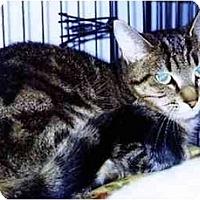 Adopt A Pet :: Abby - Medway, MA