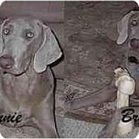 Adopt A Pet :: Bonnie & Bruno  **ADOPTED** - Eustis, FL