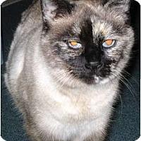 Adopt A Pet :: Mollee - Warren, OH