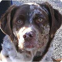 Adopt A Pet :: DukePENDING - Toronto/Etobicoke/GTA, ON
