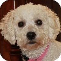 Adopt A Pet :: Maizie - La Costa, CA