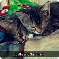 Adopt A Pet :: Callie - St. Louis, MO