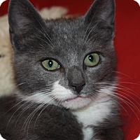 Adopt A Pet :: Didi (LE) - Little Falls, NJ