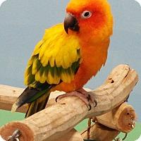 Adopt A Pet :: Josie - Lenexa, KS