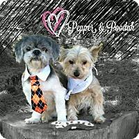 Adopt A Pet :: Pepper and Poodah Pls read  > - Seattle, WA
