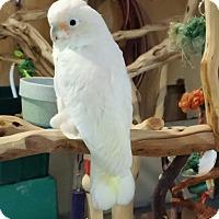 Adopt A Pet :: Bob - Lenexa, KS